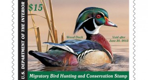 2012-federal-duck-stamp-605