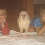 "the kids with our first owl ""Stella""  a baby barn Owl"